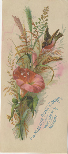 Bird with pink flower antique card