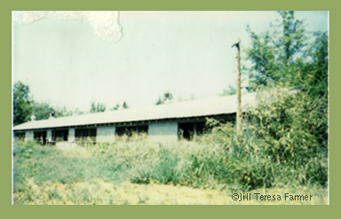 An East Texas chick house, old building of tin and wood